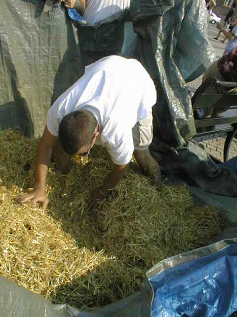 Quite literally searching for a needle in a haystack